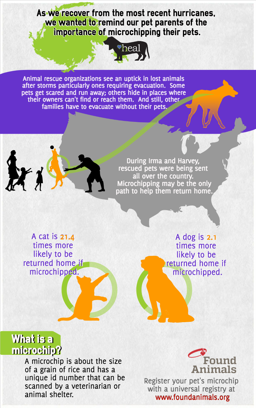 Heal Hurricane Microchip Infographic